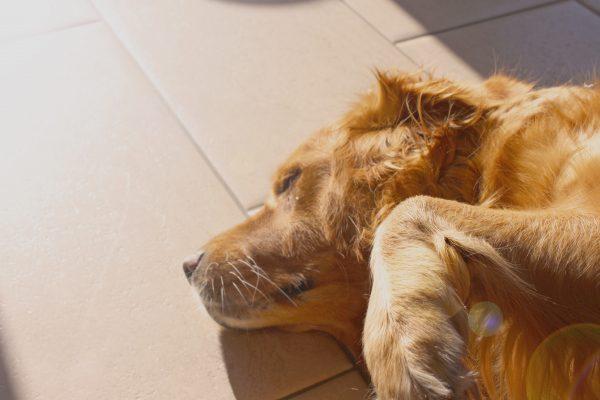 a dog in the sunshine